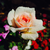 :iconlegacyknight18: