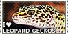 :iconleopard-gecko-fc: