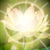 :iconlight-lotus: