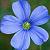 :iconlinaceae: