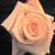 :iconlinksgirl05920: