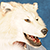:iconlionsilverwolf:
