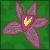 :iconlone-orchid: