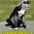 :iconlonewolfstarreh:
