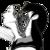 :iconlong-bunny: