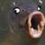 :iconlooolfishplz: