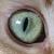 :iconlordvishiscat: