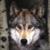 :iconlotdog: