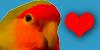 :iconlovebird-lovers: