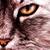 :iconlovecats: