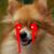 :iconluckywolfies: