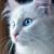 :iconlunath3cat: