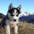 :iconlunawolf1177: