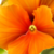:iconmagic-of-flowers-gr: