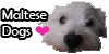:iconmaltese-dogs: