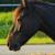:iconmanegepaard: