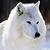 :iconmarathewolf: