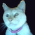 :iconmasked-meow: