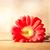 :iconmelitot: