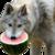 :iconmelon--wolf: