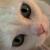 :iconmilky-the-cat: