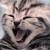 :iconmiss-kittenx: