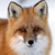 :iconmistress-foxess: