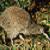 :iconmizz-kiwi: