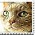 :iconmo-lovecats2plz: