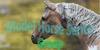 :iconmodel-horse-series: