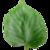 :iconmonsieur-mushroom: