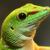:iconmoon-shard: