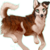 :iconmountainside-kennels:
