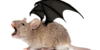 :iconmousewings-group: