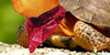 :iconmr-turtle2: