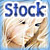 :iconmusabianca-stock: