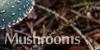 :iconmushroom-photography: