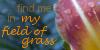:iconmy-field-of-grass: