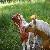 :iconmy-horse: