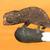 :iconnanosaurus: