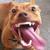 :iconnarnianbulldog: