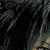 :iconncaelumbleachwolf: