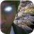 :iconnd1razor: