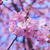 :iconnerdy-wallflower18:
