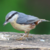 :iconnerdynuthatch:
