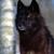 :iconngerublackwolf: