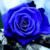 :iconnigora-rosylove: