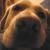 :iconnosedog2006: