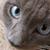 :iconnplmxandi: