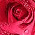:iconoblivious-rose: